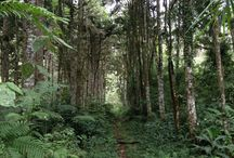 Parque Natural Regional Bosques Hùmedos El Rasgòn