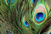 Peacocks! / by Lea Fabryk