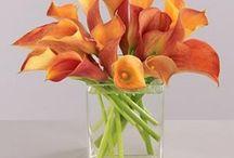 Calla Lillies and Tulips / by Brandi Moore