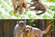 animal luv....