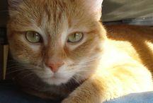 Aristocats / love cats