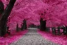 Think Pink / Pink inspiration