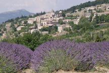 The Lavender Roads / The Lavender Roads