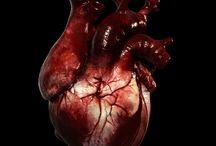 -Anatomy-