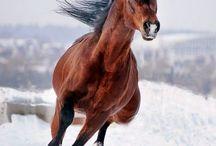 konie)