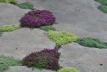 Сад Озеленение