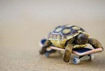 {animal skateboarding}
