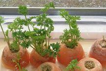Plant grønsager diy