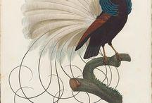 Bird ref