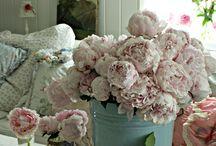 flowers / о том, что красиво