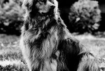 Black and white / Alb si negru ;)