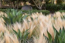roślinne kombinacje