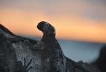 Ecuador and Galapagos / We've travelled to Ecuador and Galapagos end of 2014. It was a blast!