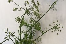 Weeds and seeds