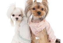 Dog Pyjamas (Pajamas)