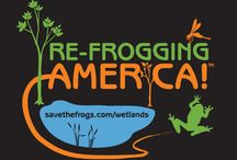 Wetlands / SAVE THE FROGS! is Re-Frogging America by building wetlands for frogs.  http://savethefrogs.com/wetlands http://savethefrogs.com/ponds