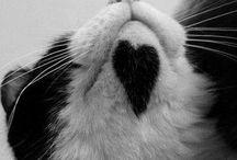 Amo animais...