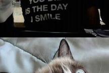 Rankka kissa