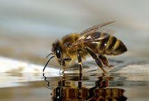 Včelárske veci