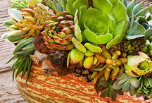 Fall Decor - Inspiration / Indoor and outdoor fall decor ideas.