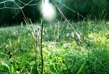 Паутинки ветер в поле перепутал