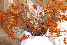 jaro léto podzim  zima