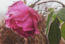 anya virágai