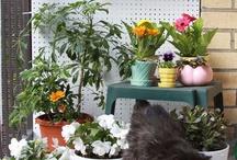 small garden ideas / by Candi Tilley