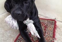 My sweet dog / My dog #dog #animal #love