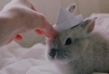 Rabbits / I ♥ rabbits
