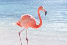F L A M I N G O S / flamingos all day errr day ;)