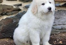 This is a cute puppy I love the puppy