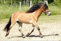 Gotland-Russ Pony