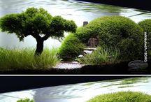 Water Florarium