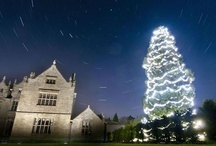 Christmas Lights / Christmas Lights as displayed in towns and villages up and down Britain.