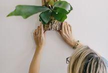 Plantes New...