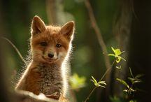 Underbara djur   Animal love