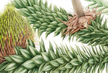 Botanical Paintings / inspirational artworks by different botanical artists
