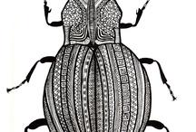 chrobák