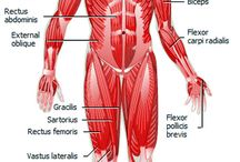 Human Body, Anatomy