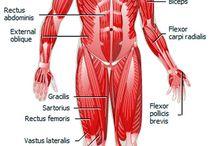 Human Body, Anatomy