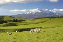 Nueva Zelanda / Descubre Nueva Zelanda con Amedida Travel Marketing
