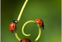 I Love Ladybugs! / by Jo Thumann