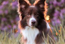 Hajkanphoto - dogs