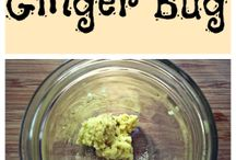 ginger bug