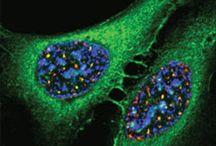 Annals of Carcinogenesis