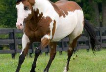 Horses♥♥♥♥ / by Lisa Alliman