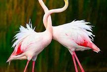 Animals: Flamingos