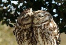 Owls  / by Malinda