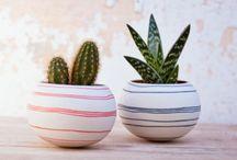 piante grasse e vasi